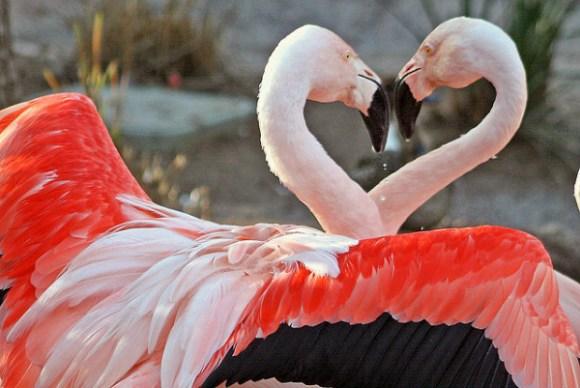 宮崎市の観光地はフェニックス自然動物園など人気スポット多数!グルメも!