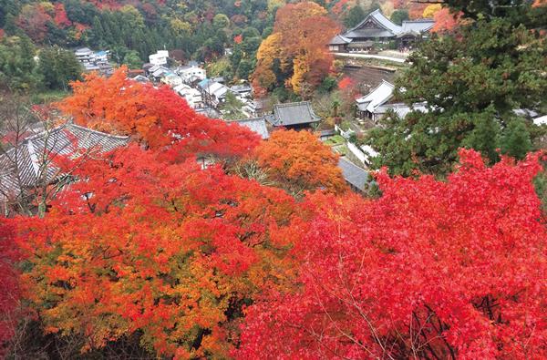 奈良の紅葉特集!名所の見頃・穴場をご紹介!ドライブにおすすめはどこ?