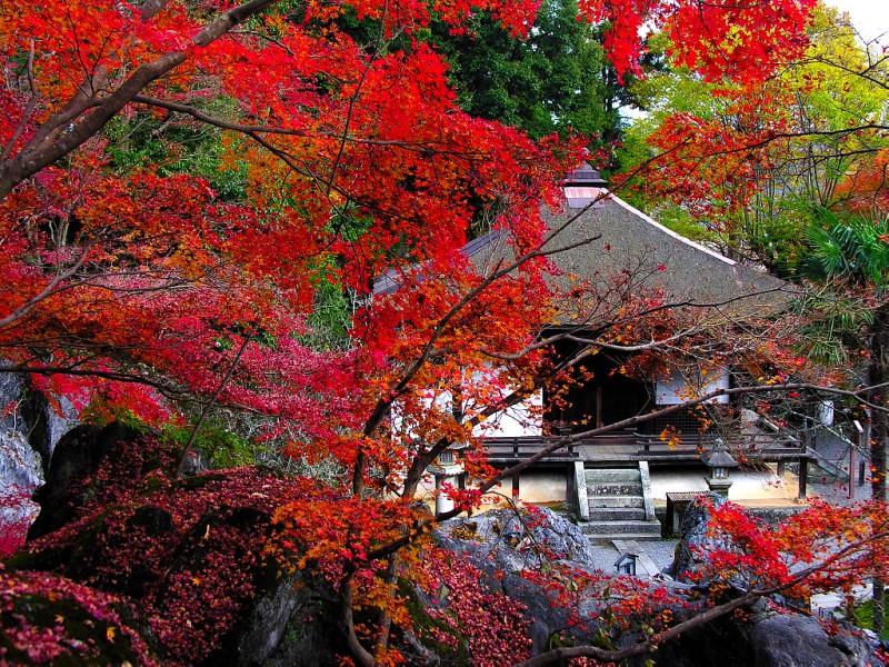 石山寺観光おすすめスポットのご紹介!御朱印を頂きに紅葉も美しい