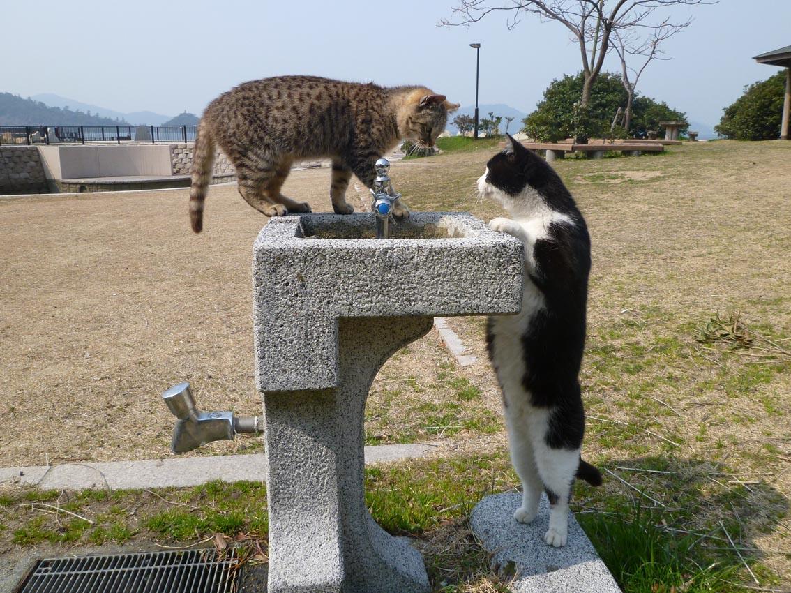 笠戸島観光は見どころたくさん!猫島で人気!釣りスポットや名物も紹介します!