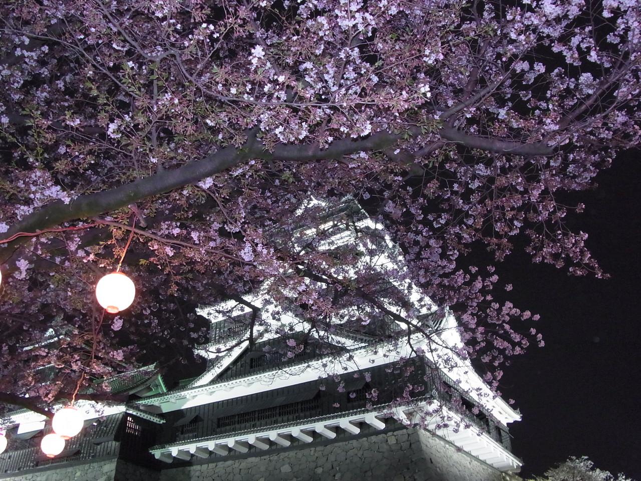 熊本城の2017年桜開花状況は?花見に最適な見頃は?ライトアップは?