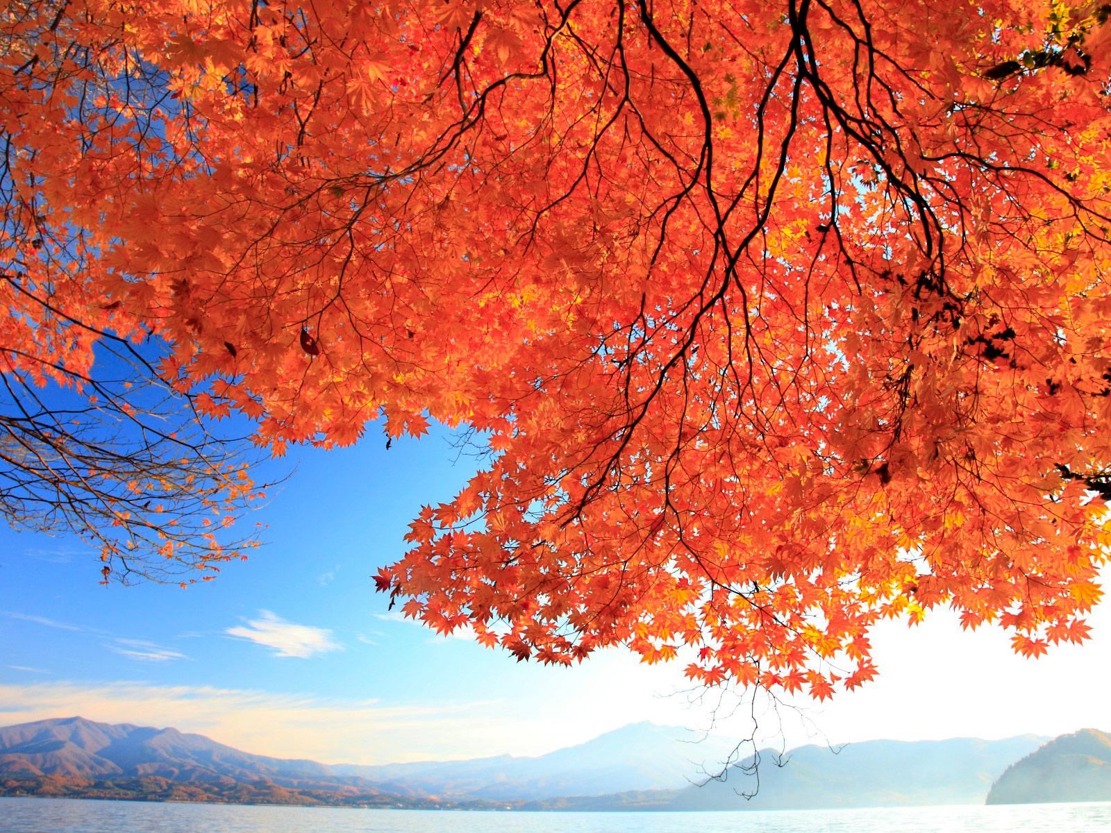田沢湖周辺の観光おすすめスポット!グルメ情報あり!紅葉がすごい!