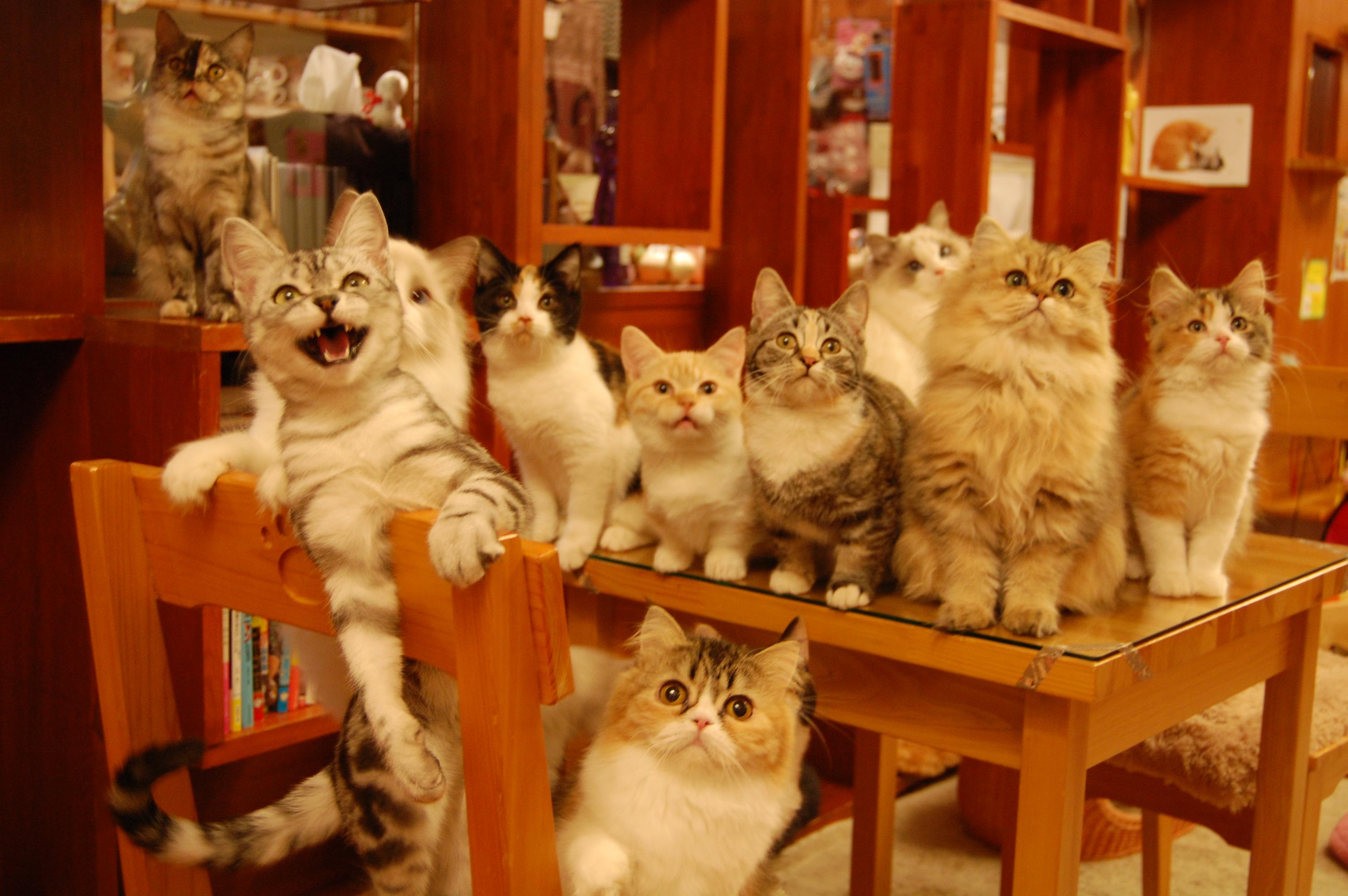 湯布院のカフェでひとやすみ!人気の猫カフェやおすすめ店も