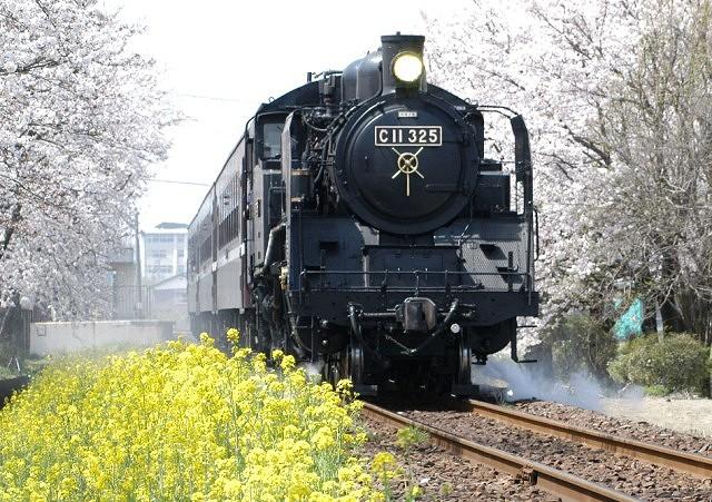 真岡市の観光スポットは穴場がいっぱい!おすすめ名所に桜・SL・体験も!