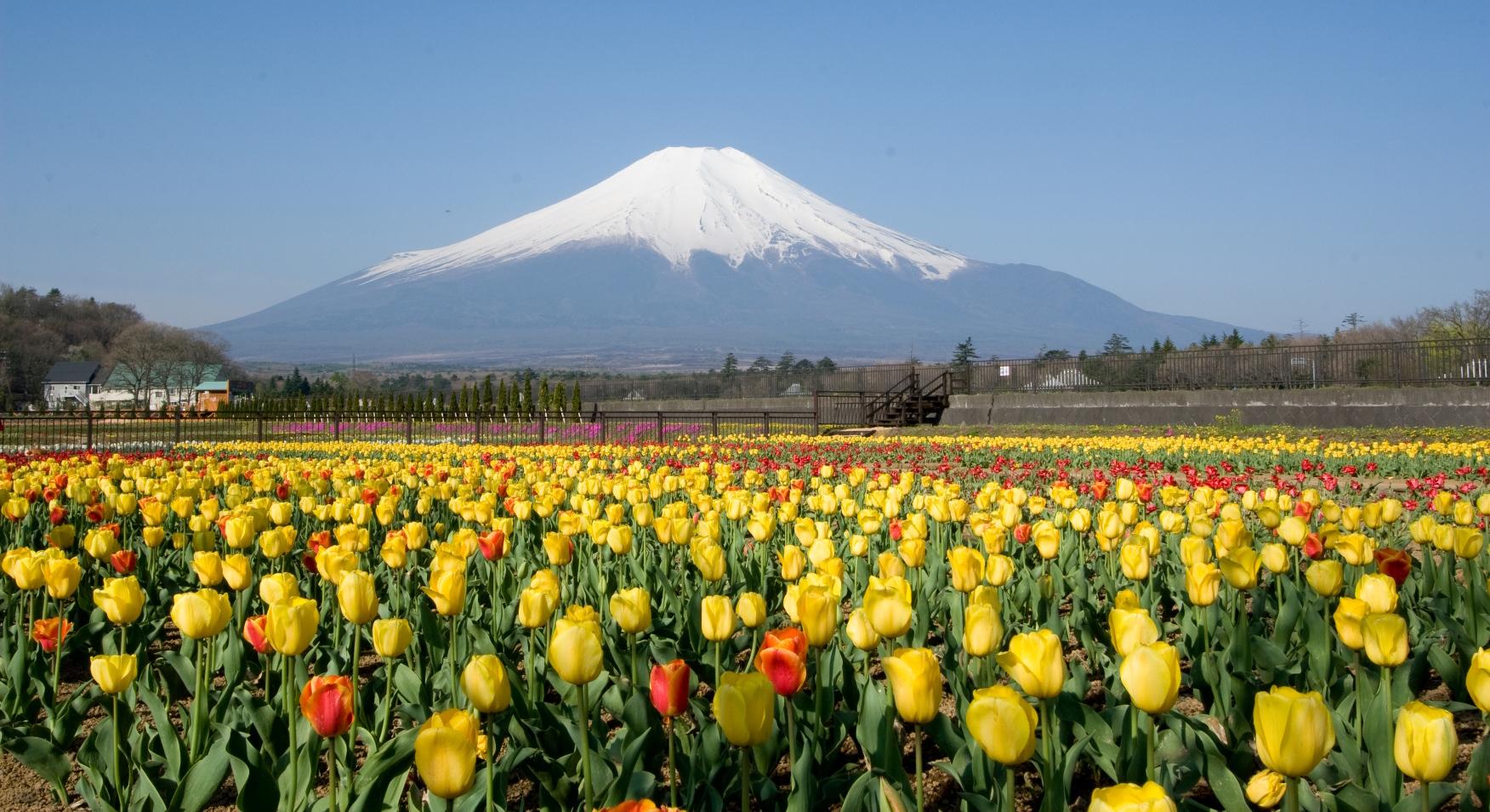 富士五湖観光におすすめ!人気温泉に入れるホテルやグルメ情報も