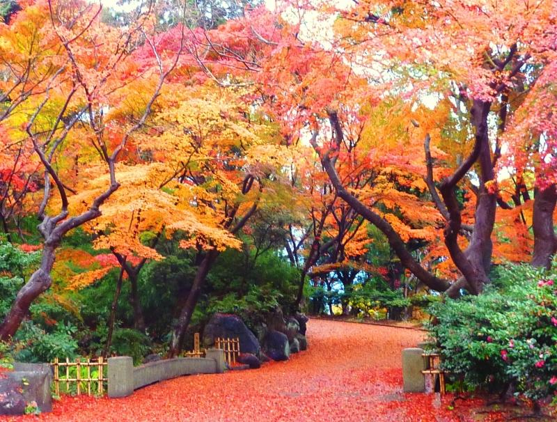 神戸の紅葉が楽しめるおすすめスポットをご紹介!穴場の見所も!