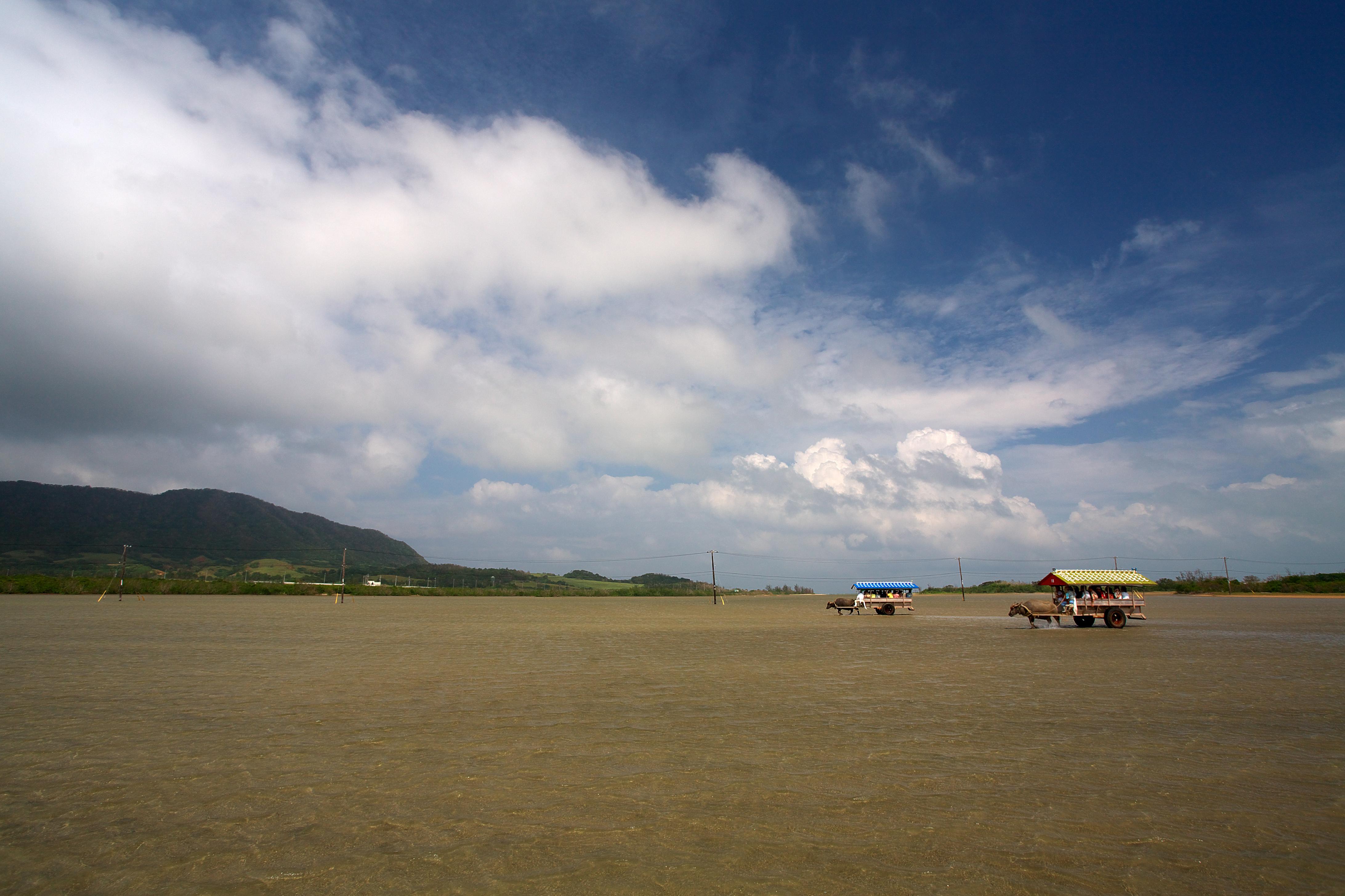 由布島の観光は水牛車がおすすめ!植物園もあり!所要時間やアクセスは?