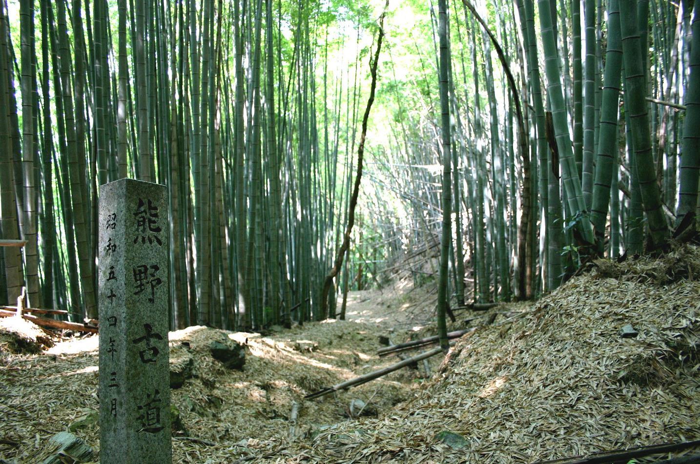 熊野古道おすすめのコース特集!人気の温泉施設や観光名所などもご紹介
