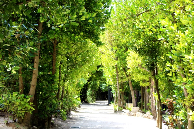 「備瀬のフクギ並木」は沖縄本部町の人気癒やしスポット!アクセスは?