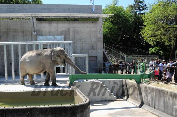 岡崎東公園動物園は一日中楽しめる!沢山の動物や遊具・イベント情報も!