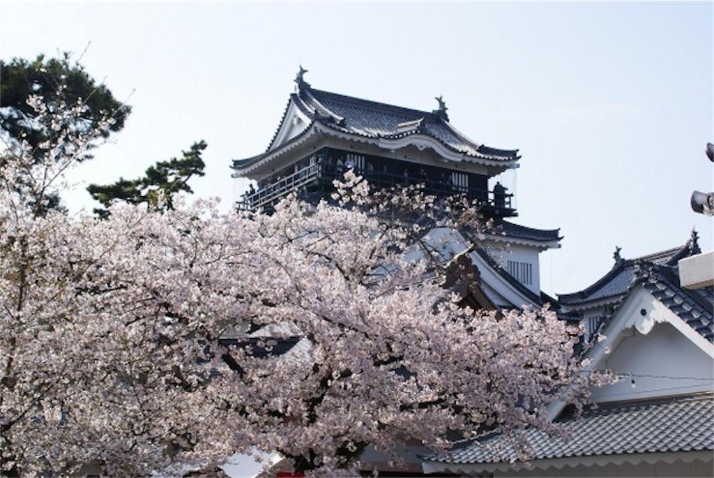 岡崎公園は桜の名所!見頃や桜祭りの時期・ライトアップ情報も!