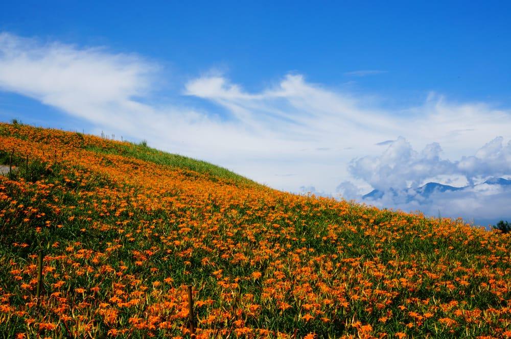 花蓮の六十石山で金針花の花畑に感動!台湾でも有名な絶景スポット!