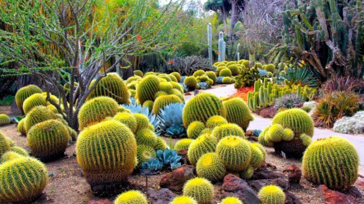 アメリカ・アリゾナ州フェニックスの人気観光スポットをご紹介!