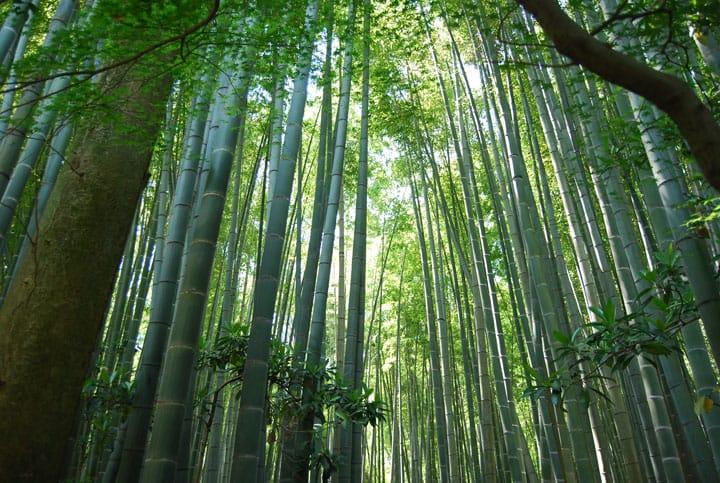鎌倉の竹林といえば報国寺!アクセス方法やおすすめの時期を紹介!