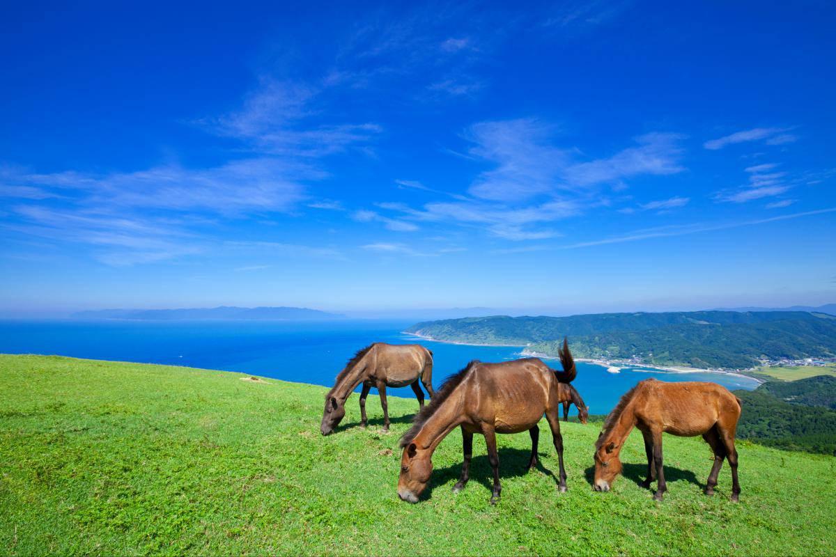 都井岬観光で野生の馬に会おう!アクセスや宿泊ホテルにランチ情報も!