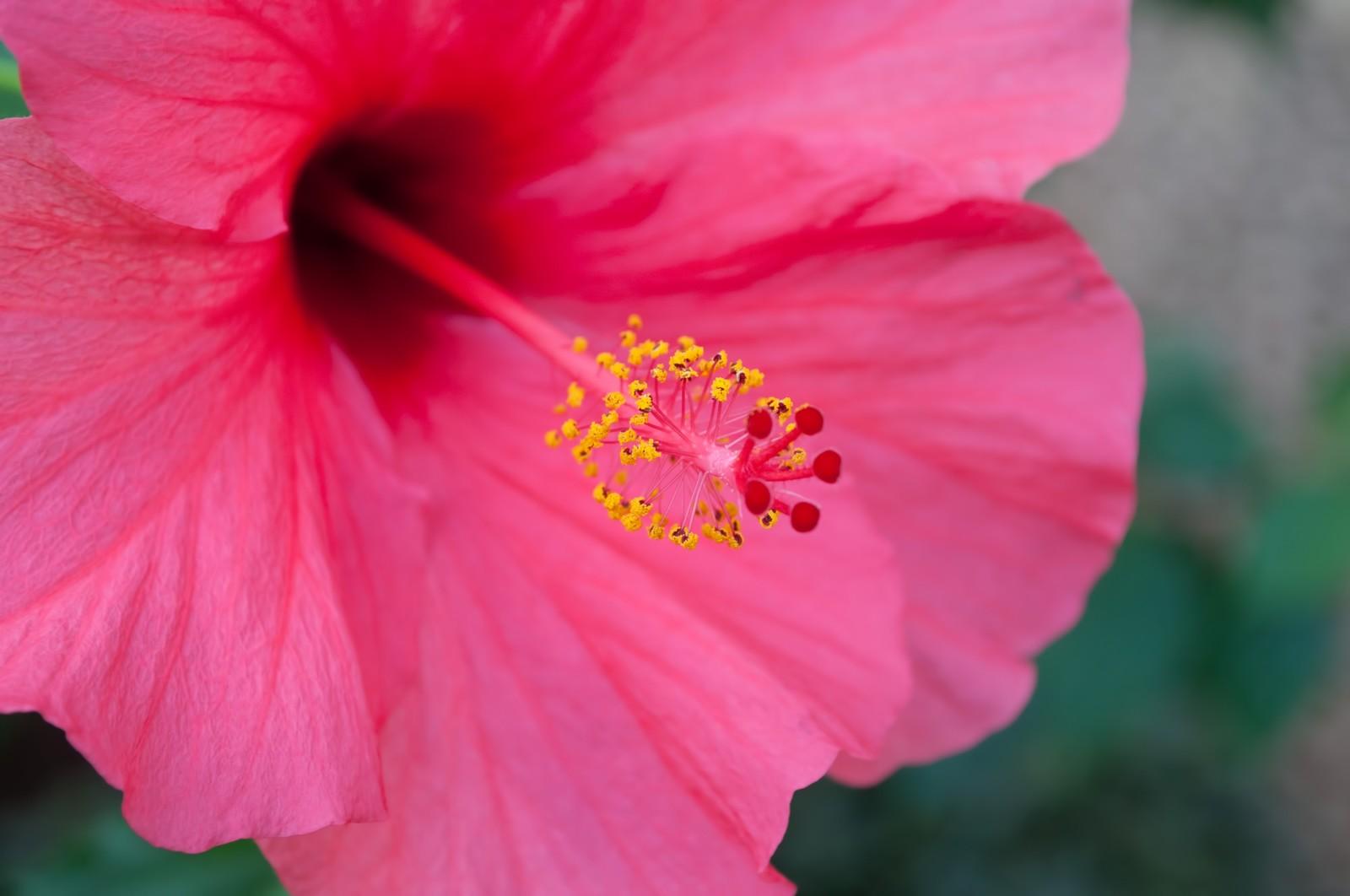 ハワイの花や植物の花言葉を紹介!プルメリアはレイにも使われている?