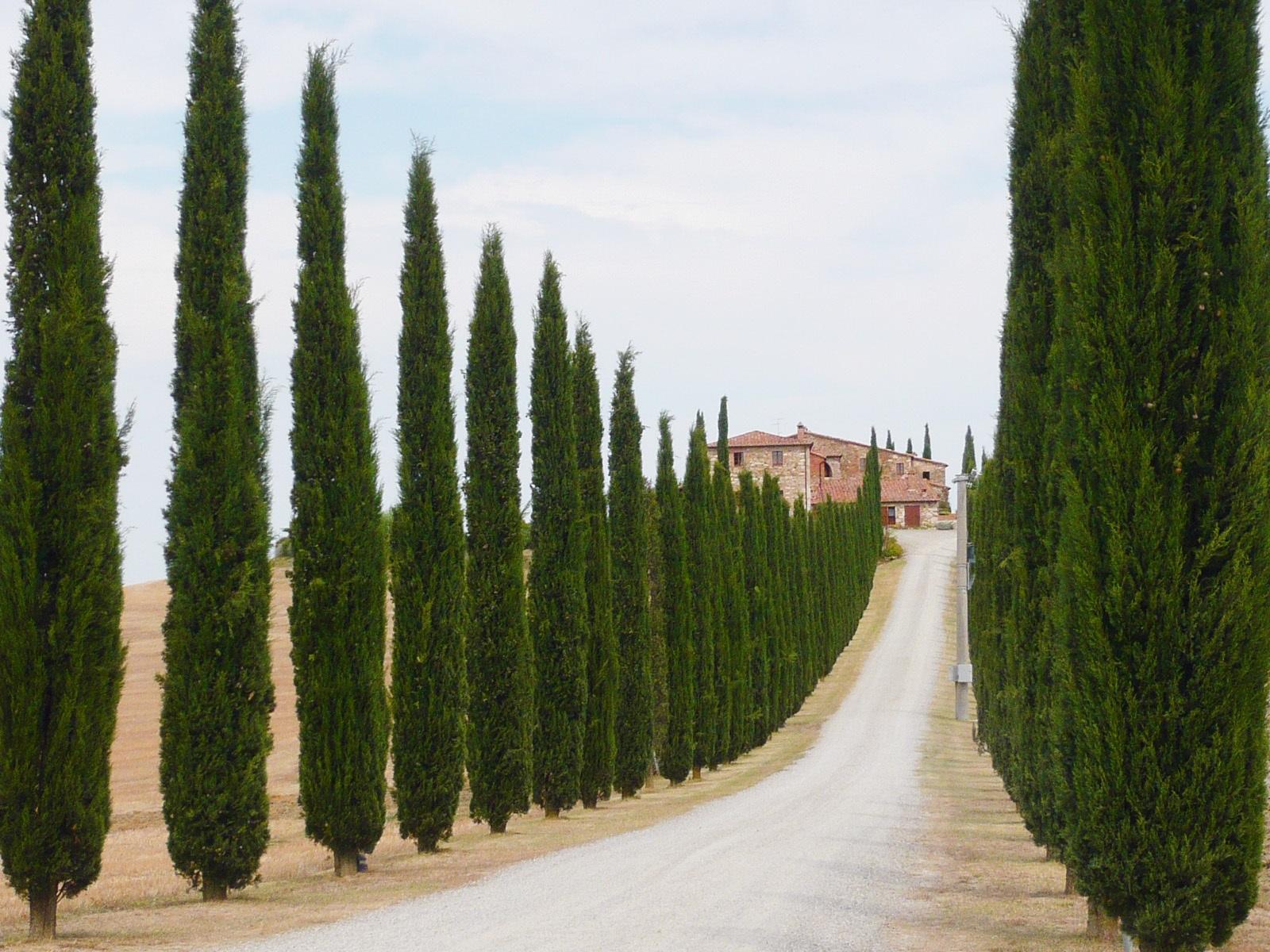 トスカーナ地方は観光名所が盛りだくさん!ワインの産地でもあり!