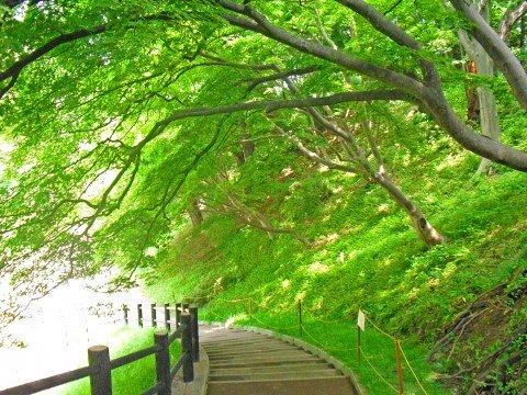 北海道・石狩地方の観光をまとめ!温泉や朝市・人気のイベントも紹介!