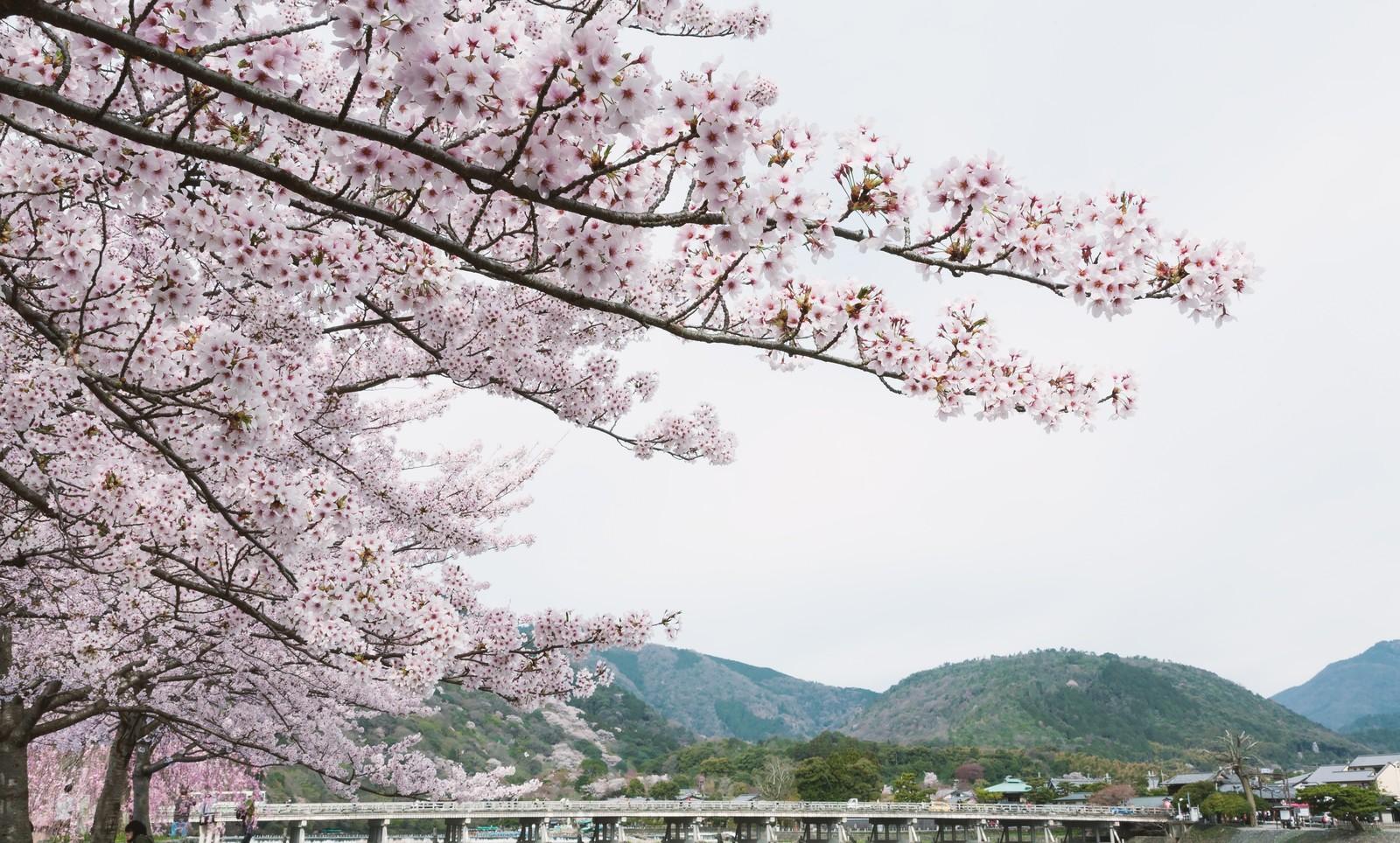 嵐山へのアクセスは電車・バス・車どれがおすすめ?京都駅からの行き方も紹介!