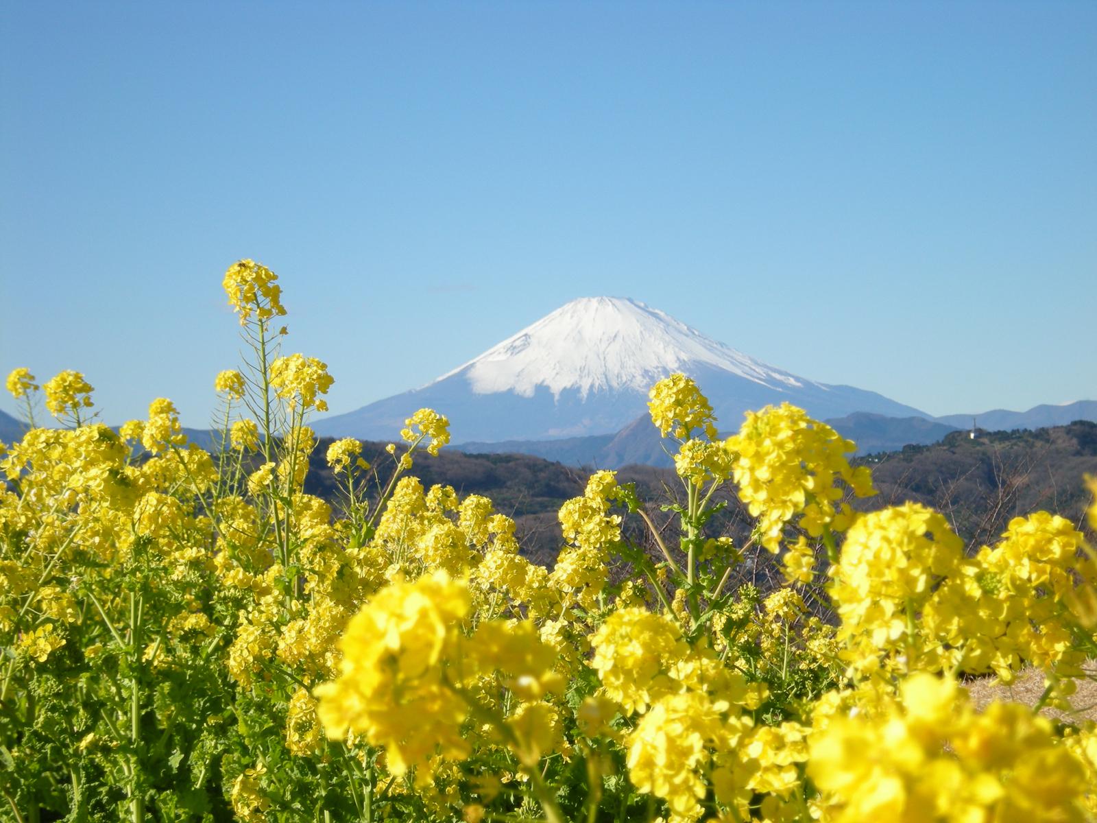 富士山と初日の出を写真に!ダイヤモンド富士のおすすめスポットや穴場も紹介!