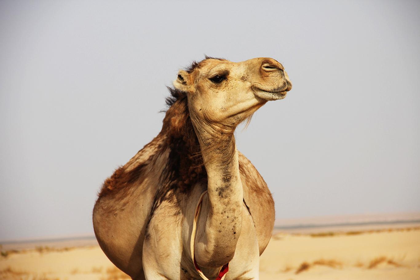 チュニジアの観光スポットを紹介!人気旅行先の世界遺産などを網羅!