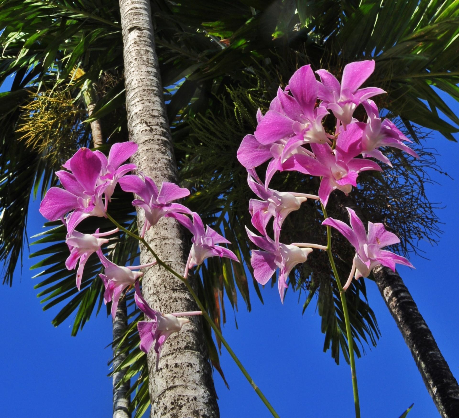 ドミニカ共和国の観光旅行でおすすめを紹介!世界遺産やお土産・治安情報など!