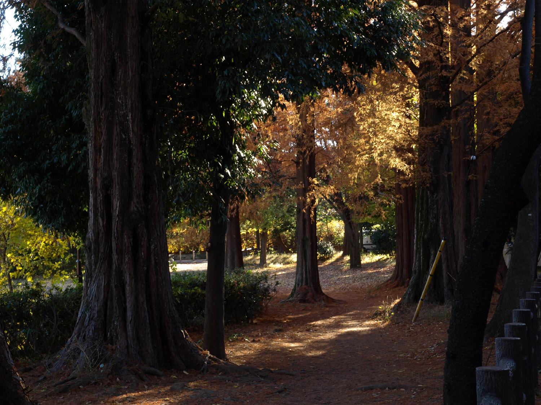 川崎市内の公園まとめ!子供に人気!ピクニックにもおすすめ!