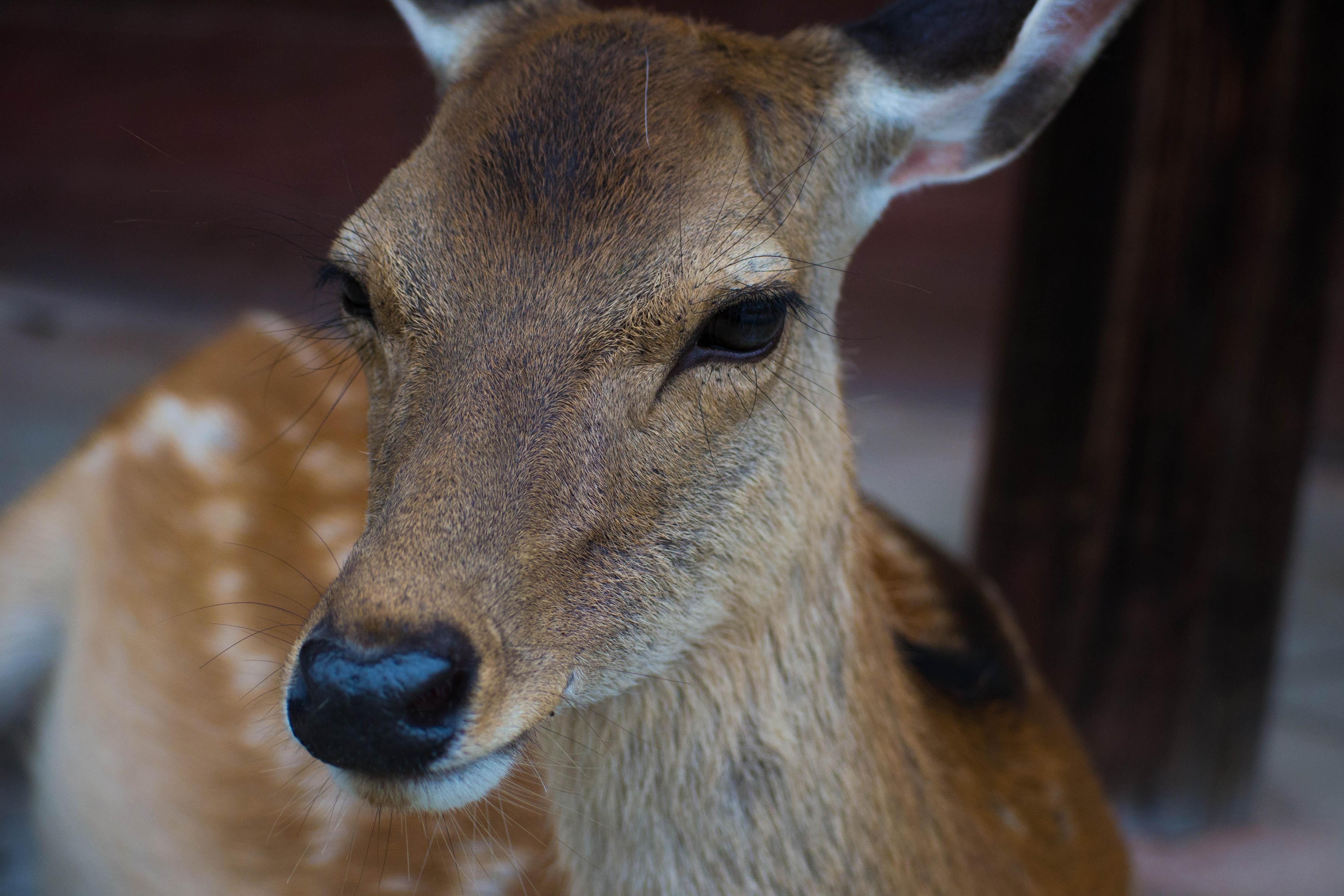 奈良公園周辺のランチおすすめスポット11選!オシャレなカフェなど紹介
