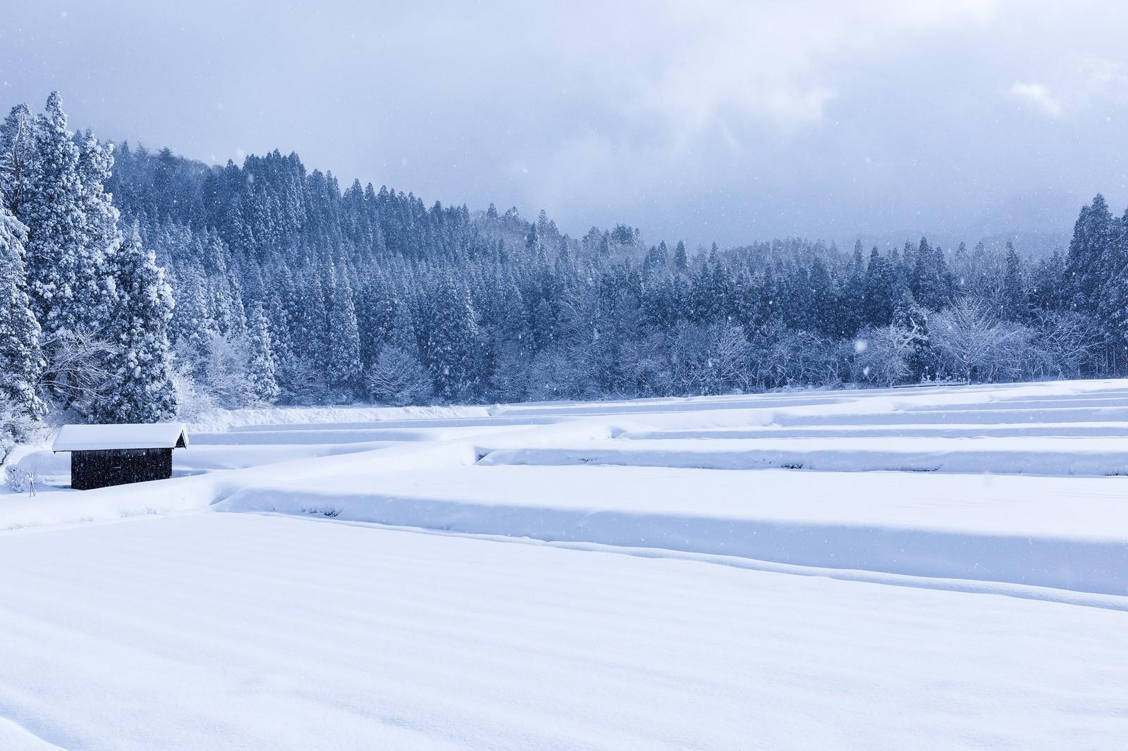 十日町雪まつりの豪華ゲストが話題!日程やアクセス方法・見どころも満載!