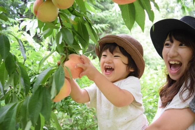 岡山で桃狩りのおすすめはココ!食べ放題など人気の農園で楽しもう!