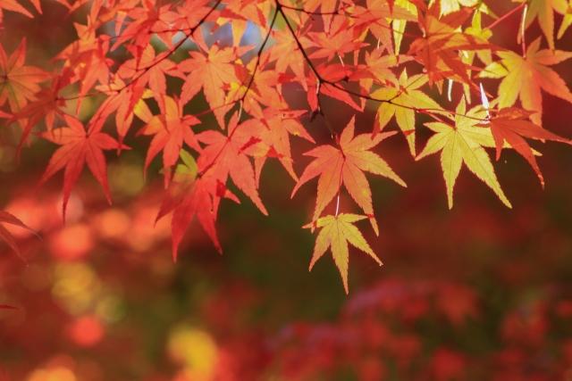 「秋」限定の絶景スポット特集!日本の美は感動必至のタペストリー!
