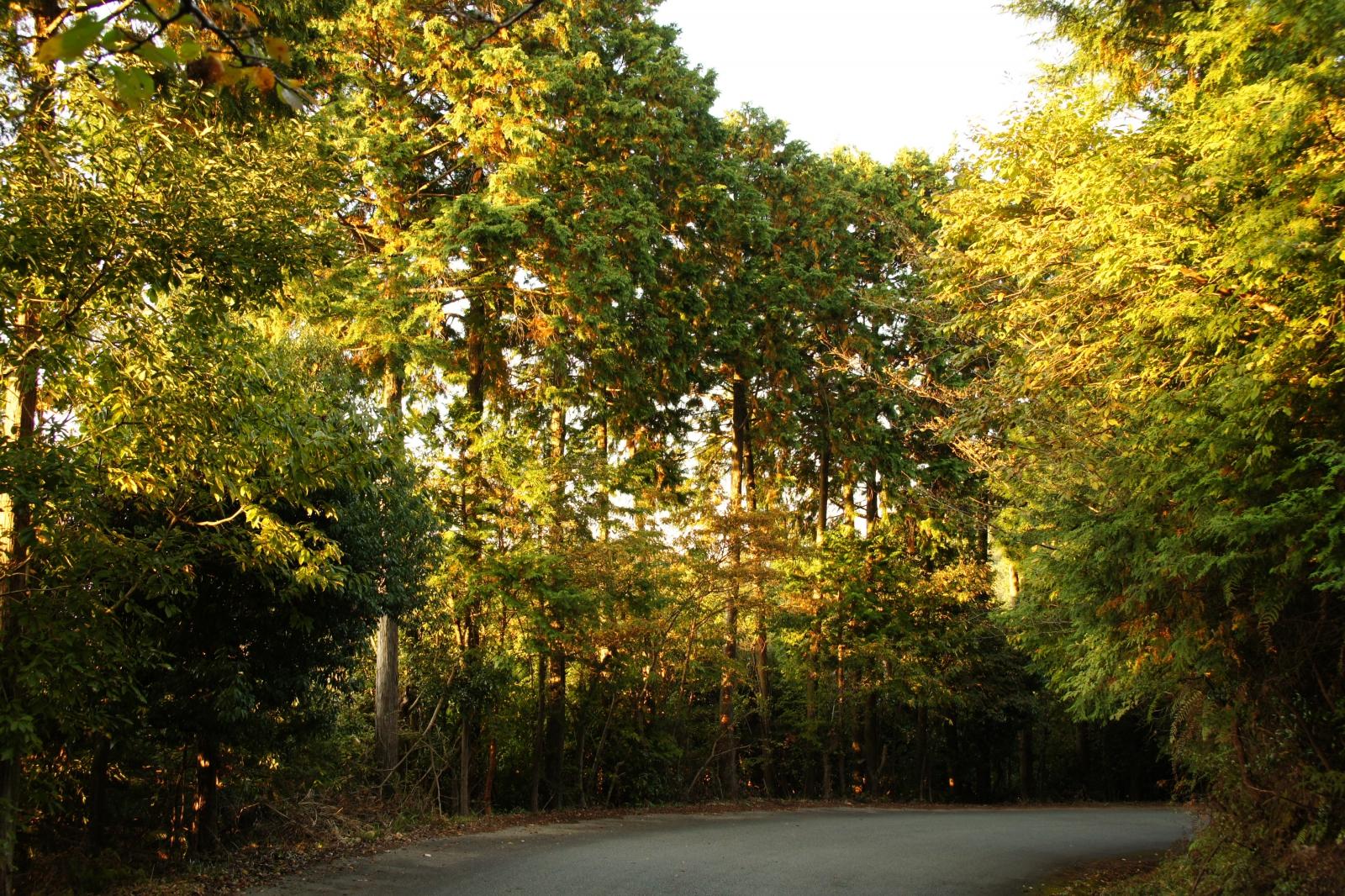 奥多摩のドライブスポット7選!自然豊かな人気観光地を満喫しよう