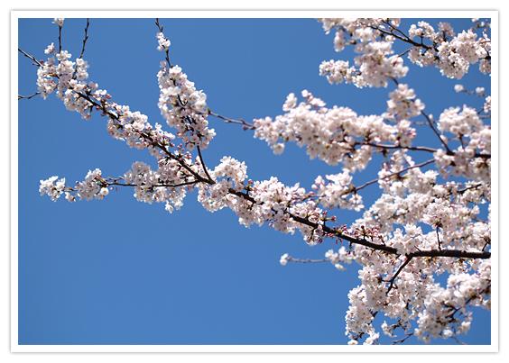 京都・哲学の道の魅力とは?桜や紅葉の見頃や周辺の人気カフェを紹介