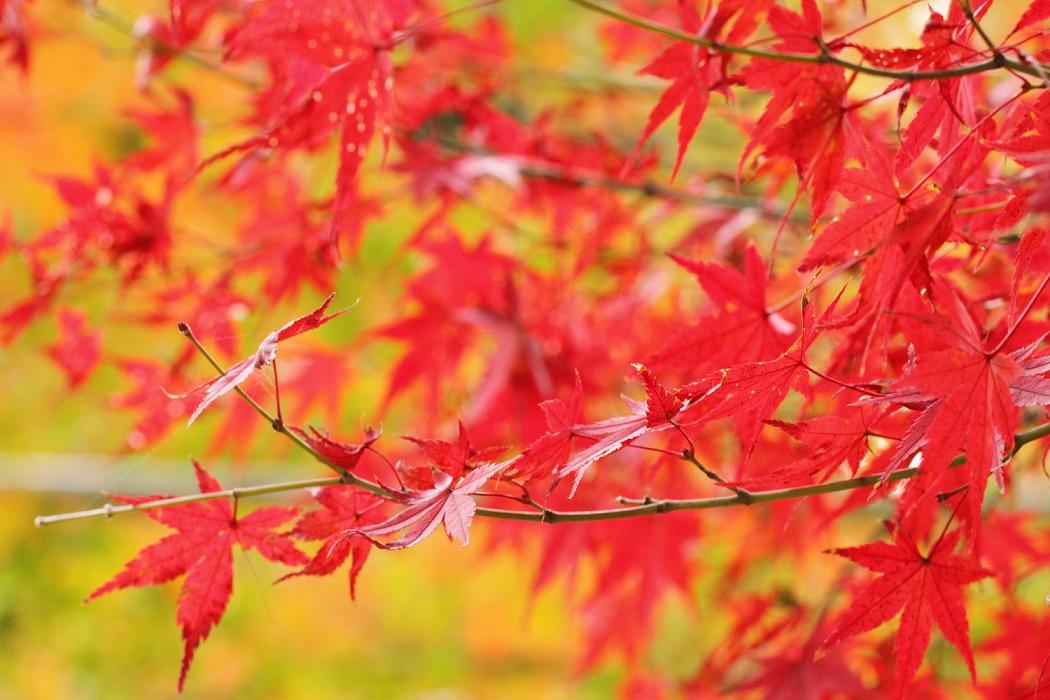 定山渓の日帰り温泉ランキング!札幌からのアクセスも良好な温泉地は紅葉も人気!