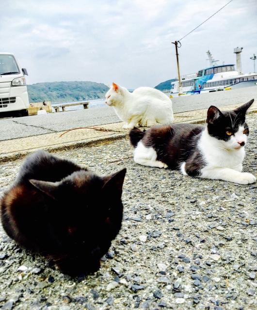 相島は猫好きには堪らない福岡観光の穴場!人気の島への行き方は?