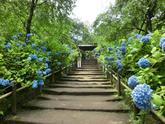 北鎌倉でランチするなら?大人の街で人気!雰囲気抜群の隠れ家スポット11選!