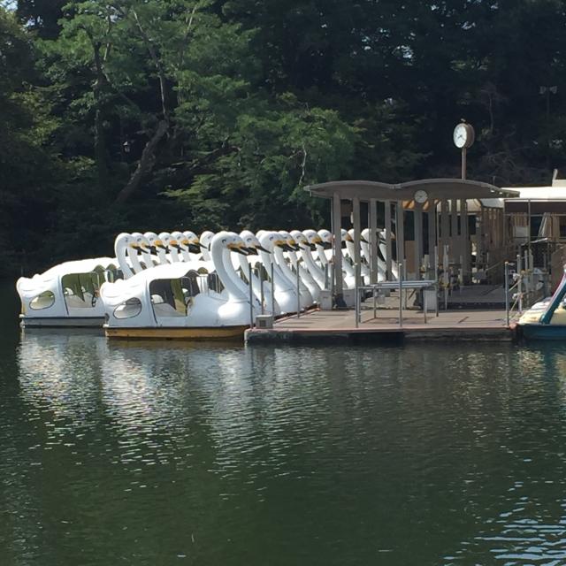 井の頭公園のボートに乗ると別れるってホント?スワンの価格や混雑情報もアリ!