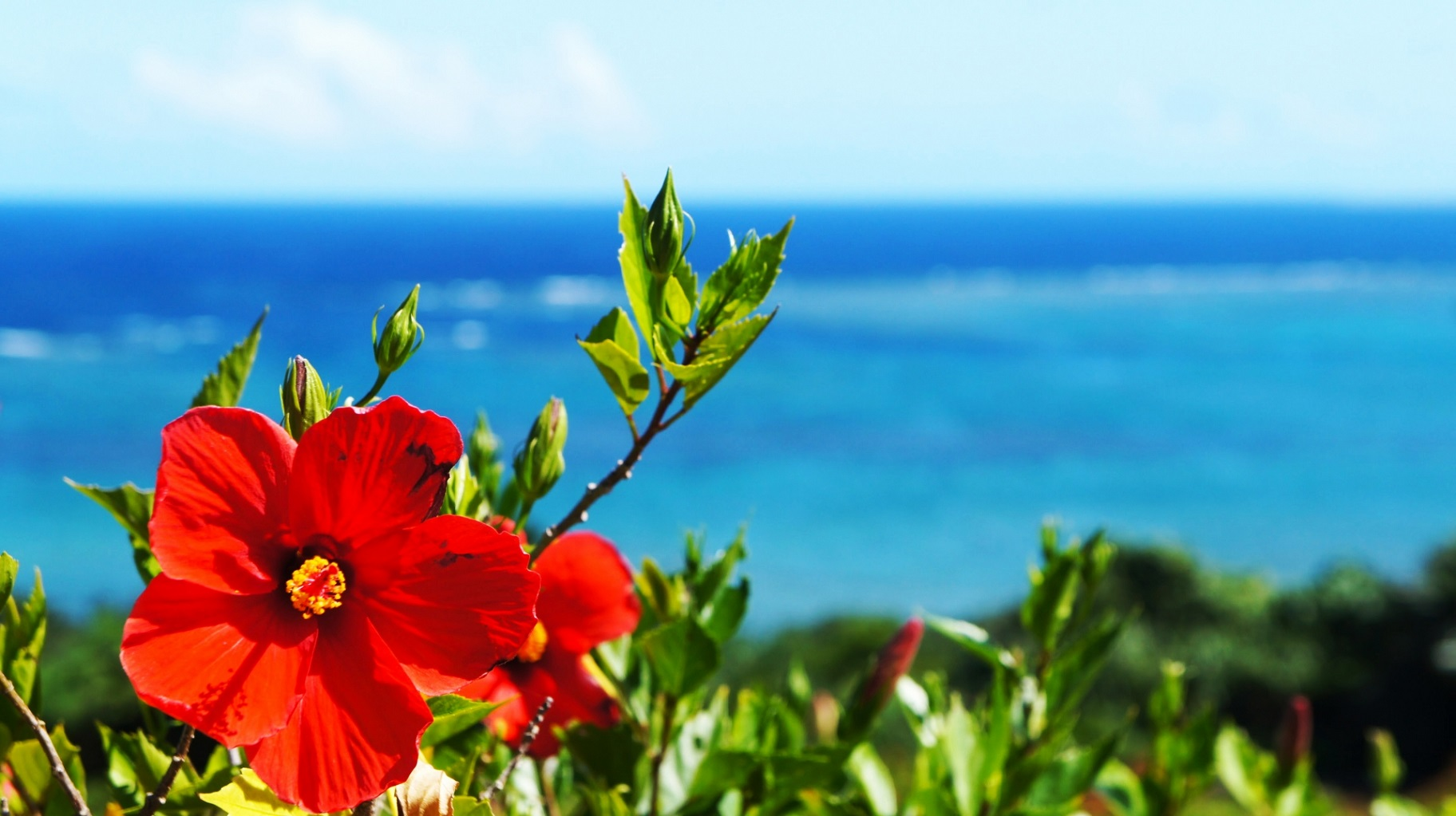 知念岬公園は沖縄の穴場!星空や初日の出の絶景スポットでおすすめ!