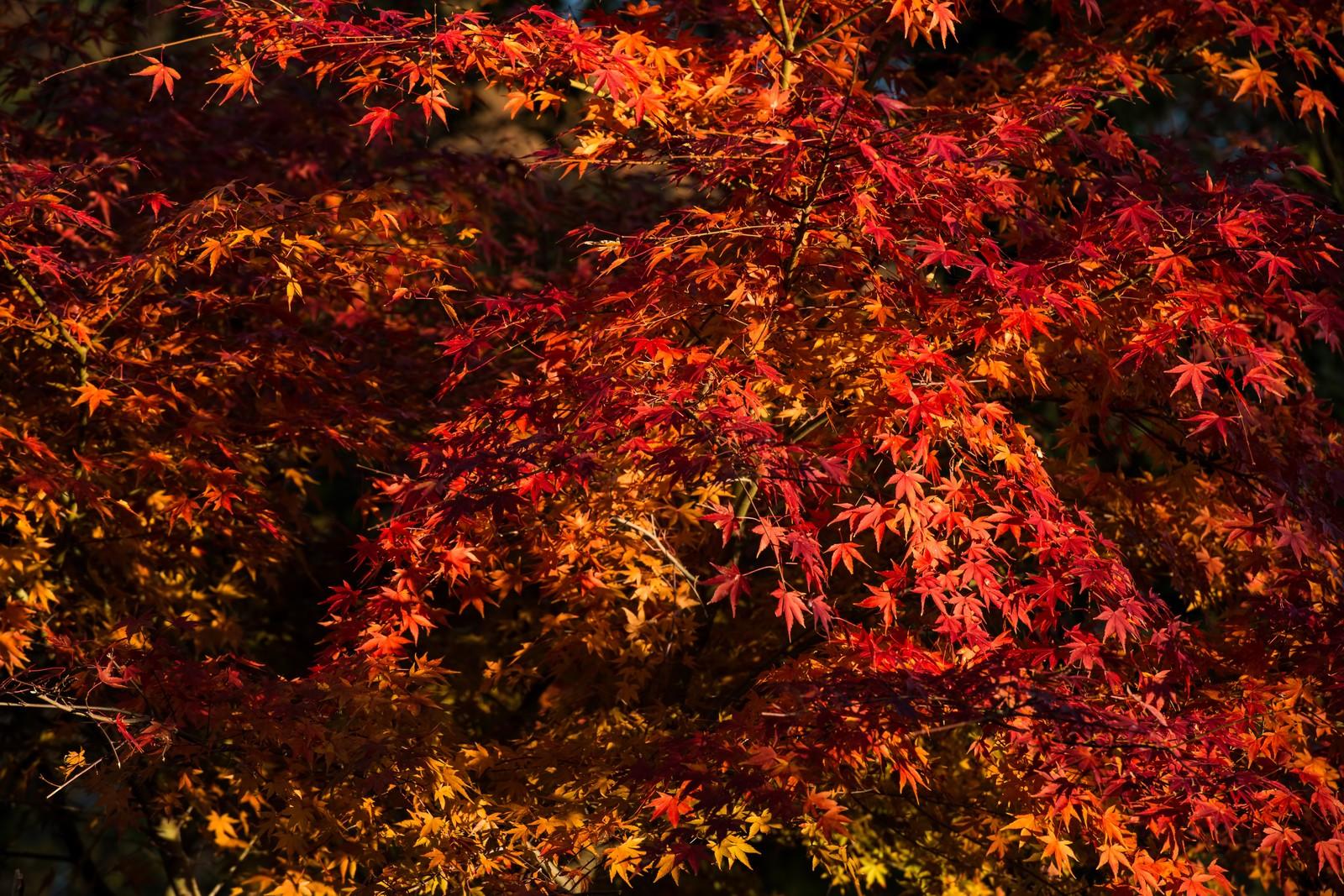 奥多摩の紅葉の見ごろは?ドライブやハイキングで秋の大自然を満喫!