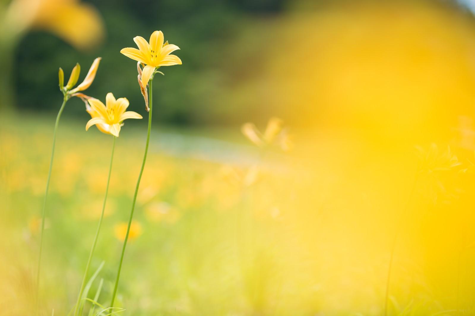 館山ファミリーパークで花摘みや釣りなどを体験!料金やアクセス方法もご紹介!