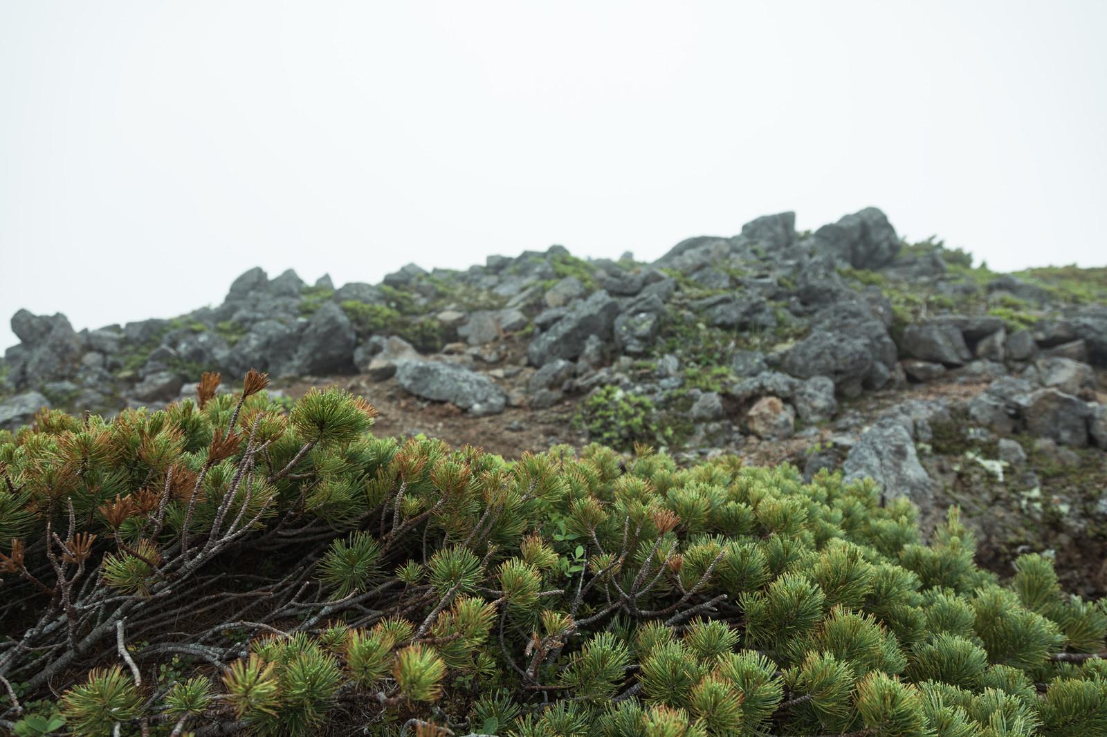 御岳山登山ガイド!初心者におすすめのコースもあり!時間はどのくらい?