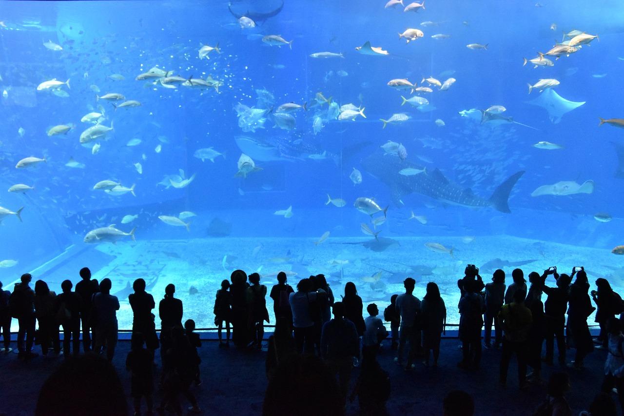 美ら海水族館へのバスでの行き方や料金は?空港からの直行便やツアーもあり!