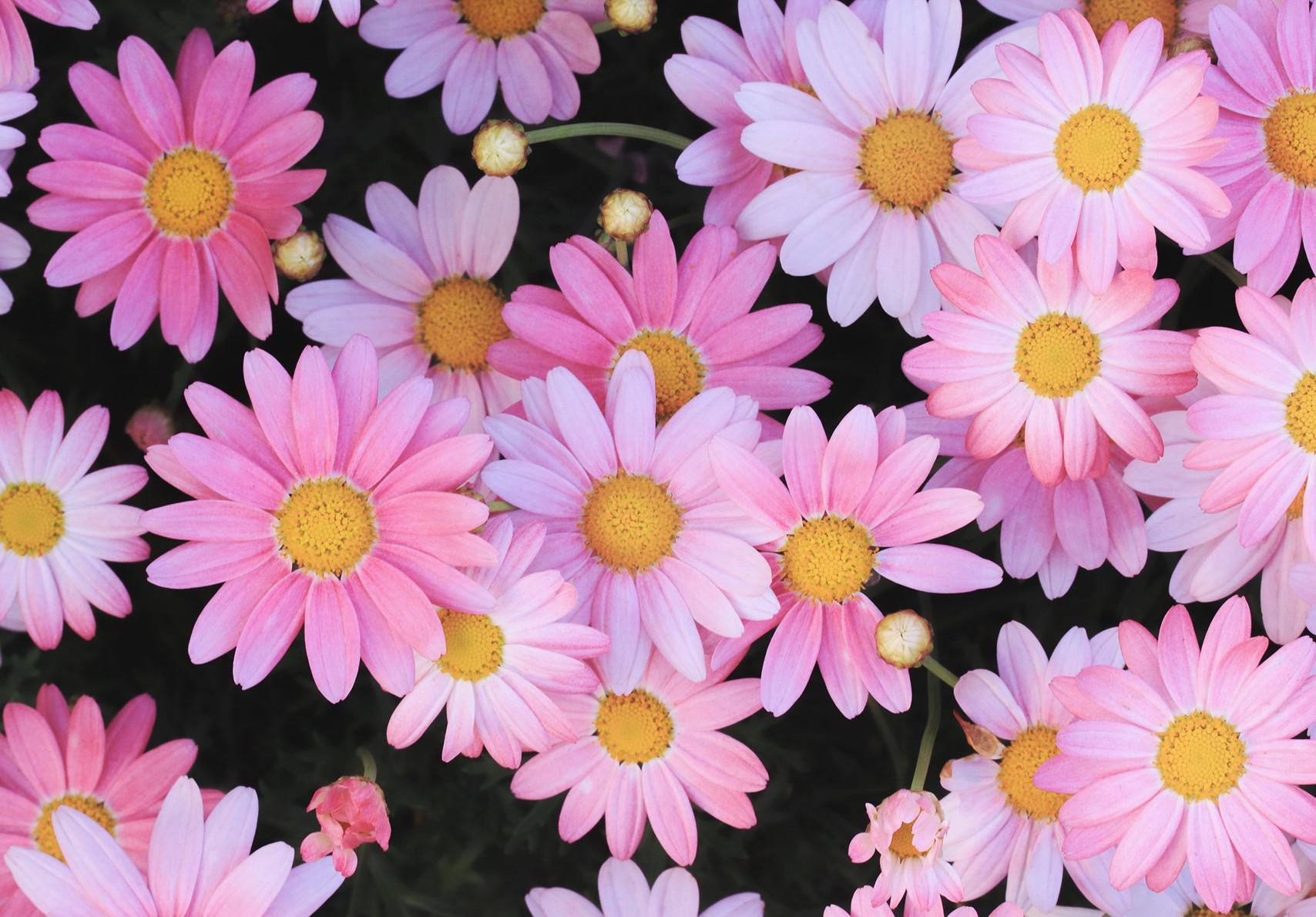 フラワーパーク浦島の開花状況は?人気の花摘み・アクセス・営業時間など紹介!
