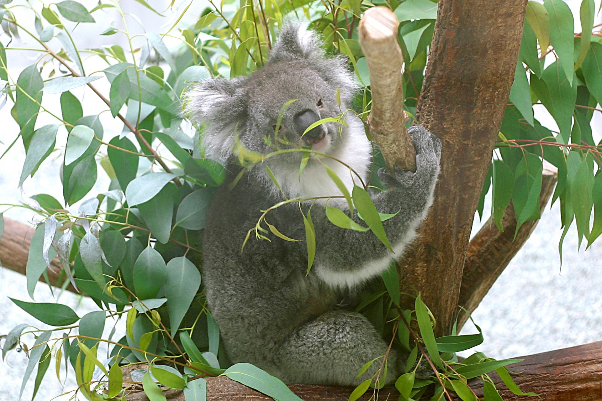 埼玉県こども動物自然公園は1日楽しめる人気スポット!子供が喜ぶ無料体験も!