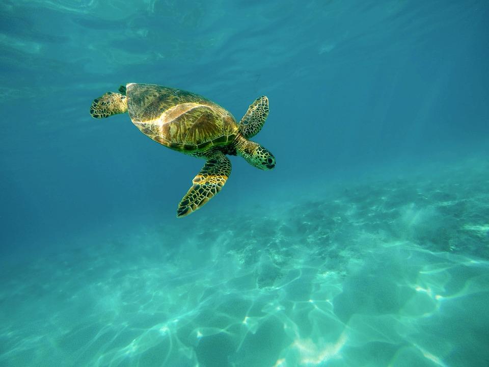 宮古島のシュノーケリングスポットならココがおすすめ!ウミガメに会えるかも?