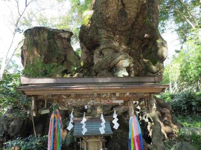 熱海の神社のパワースポットを紹介!来宮神社をはじめ人気の場所を一挙ご紹介!