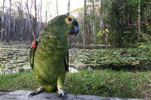 パンタナール大湿原はブラジル屈指の観光スポット!大自然を満喫しよう!