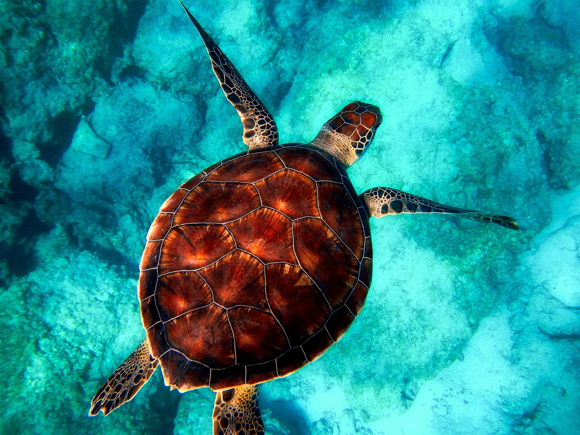 インド「アンダマン諸島」の魅力とは?行き方やおすすめ観光スポットも紹介!