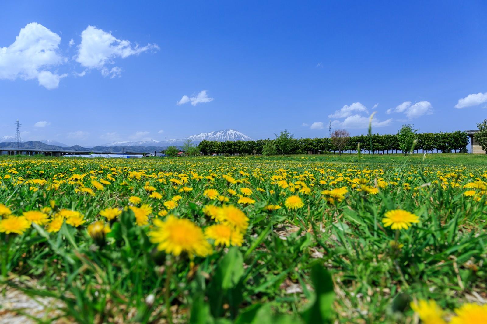 南昌荘は盛岡の名スポット!美しい庭園は紅葉もきれい!おすすめ情報を紹介