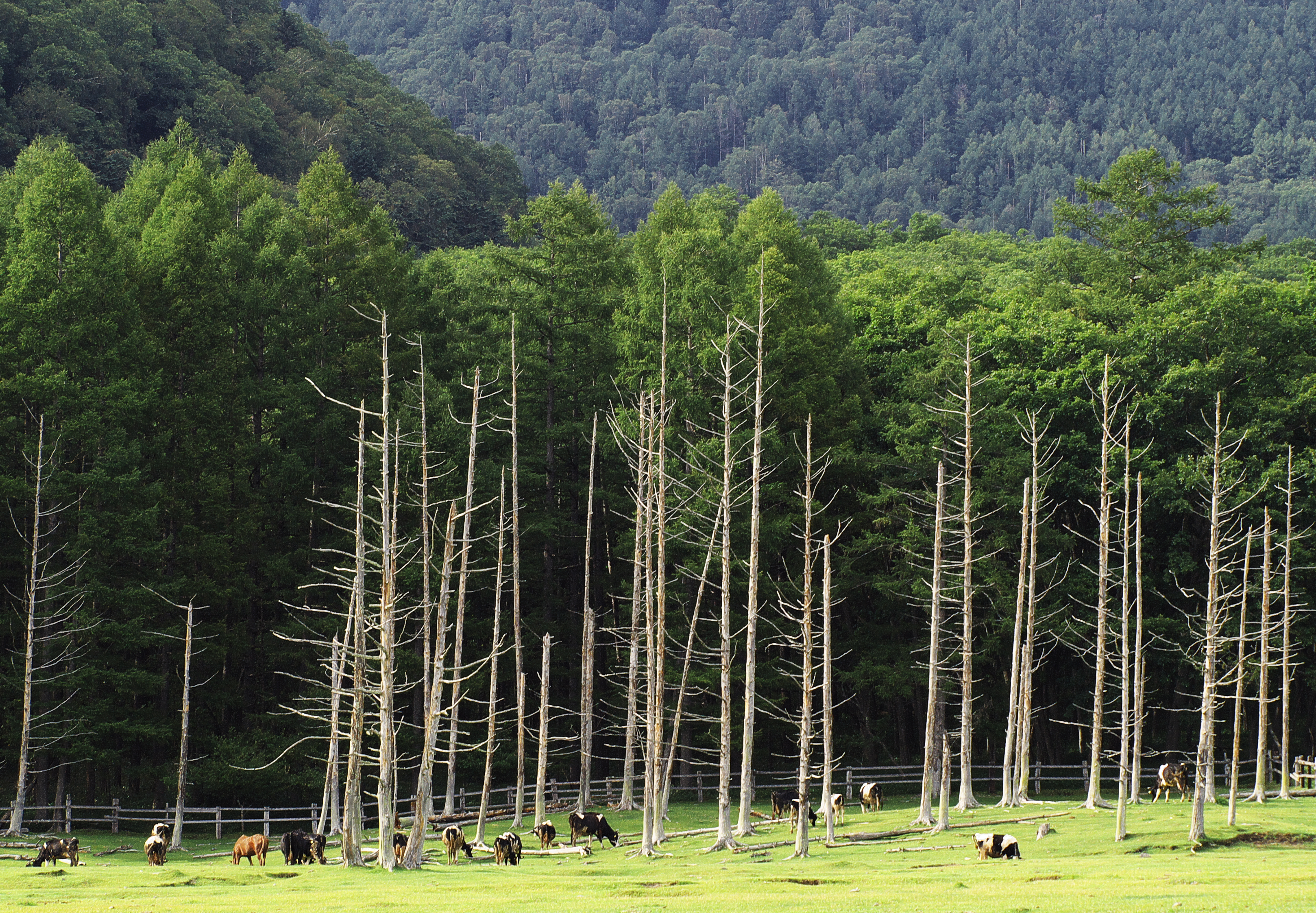 藤城清治美術館は那須高原の人気観光スポット!アクセスや料金など紹介